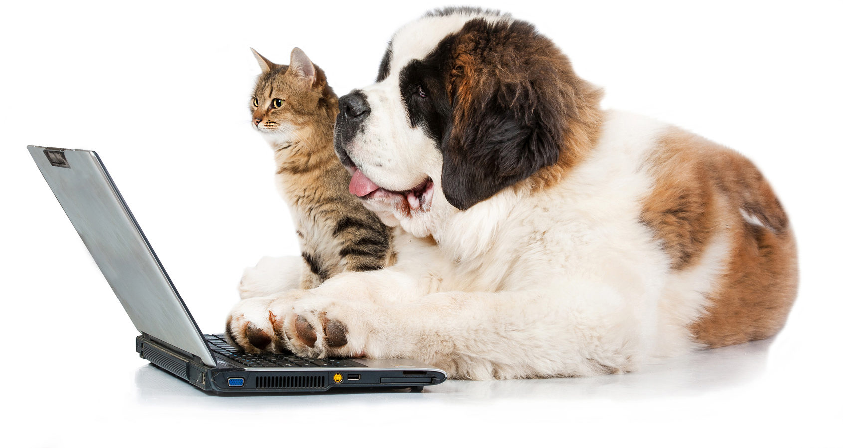 Tierbedarf online günstig bei kaufen |